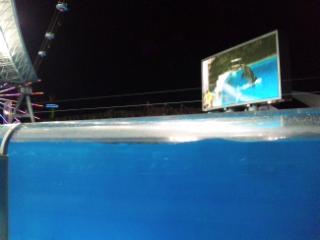 名古屋港水族館のNightShow を見てきました