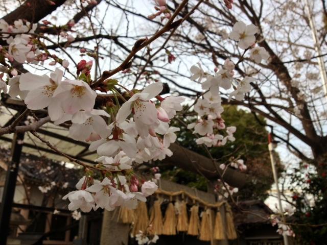 名古屋の桜は所により満開も